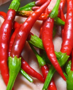 chile_de_arbol_peppers_med_hr