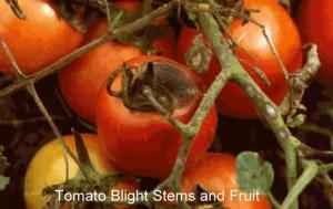 eblight3lg1_fruit