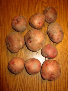 Pontiac Red Potatoes (Solanum tuberosum)