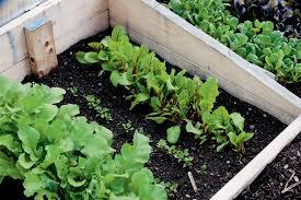 succession planting1