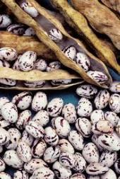 Beans pods2