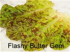Lettuce-Flashy-Butter-Gem-LT160-web