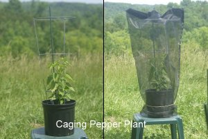 seed saving cages 3whole